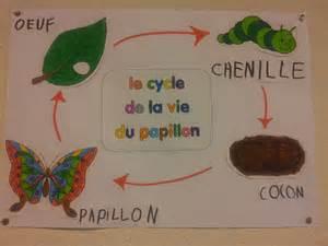 1000 images about chenille papillon on pinterest