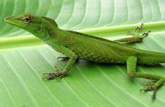 amazing amazon images amazon rainforest amazon