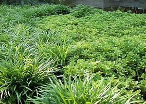 Gräser Sichtschutz Immergrün : mit freundlich wirkenden schattenpflanzen den garten bereichern gartengestaltung inhortas ~ Buech-reservation.com Haus und Dekorationen