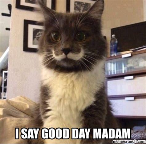 Nice Day Meme - stache cat good day