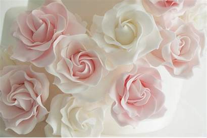 Roses Rose Cake Cascade Discovering Umm Habibah