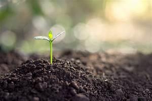 Was Brauchen Pflanzen Zum Wachsen : keimbl tter pflanzen so setzen sie junge pfl nzchen richtig in die erde ~ Frokenaadalensverden.com Haus und Dekorationen