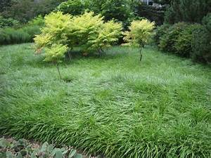 Future Plants by Randy Stewart: Liriope & Mondo Grass