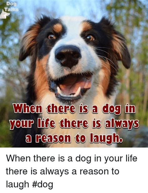 Dog Laughing Meme - 25 best memes about laughing dog laughing dog memes