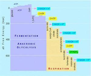 Lon-capa Botany Online  Basic Metabolism