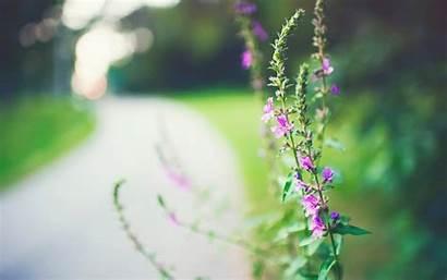 Blur Background Wallpapers Flower Flowers Screen Close