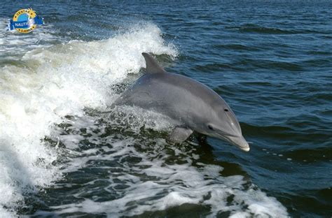 le chant des dauphins djerba djerba infos cartes photos h 244 tels sorties restaurants
