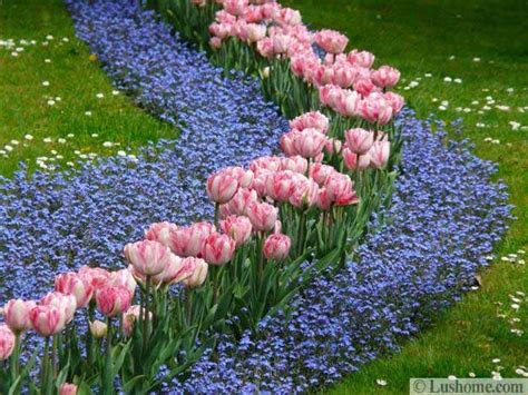 ideas for planting tulips to create dazzling accents and