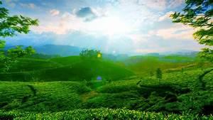 Beautiful green landscape wallpaper
