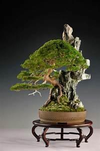 Bonsai Stecklinge Machen : wundersch ne bonsai baum kompositionen ~ Indierocktalk.com Haus und Dekorationen
