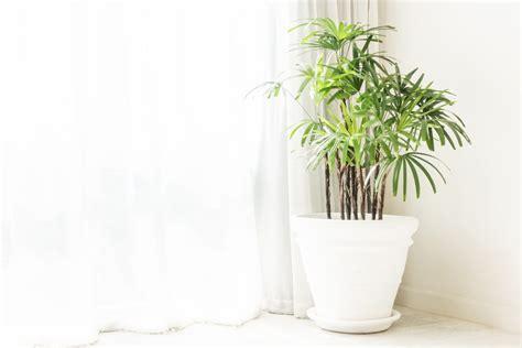 quelle plante pour salle de bain quelle plante pour la salle de bain photos de conception de maison agaroth