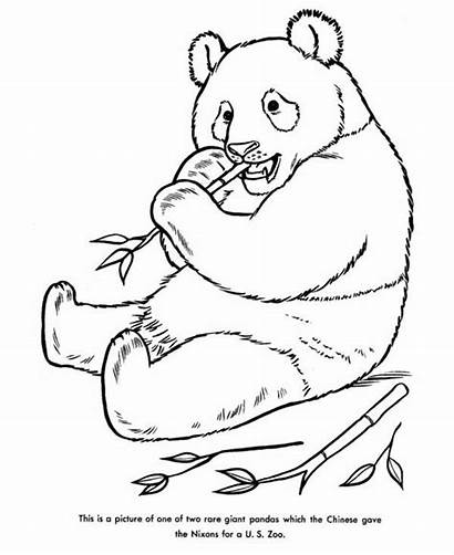 Panda Coloring Giant Pages Drawing Bamboo Eating