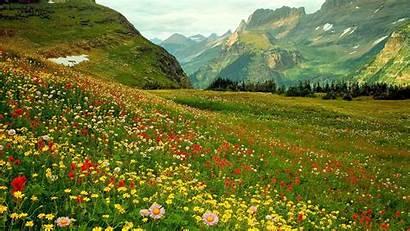 Wild Flowers Alpine Desktop Widescreen Wallpapersafari Wildflowers