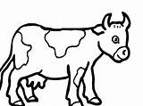 Coloring Pages Herd Cows Cow Popular Printable sketch template