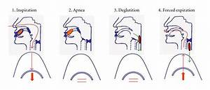 Diagnosis And Management Of Oropharyngeal Dysphagia And Its Nutritional And Respiratory