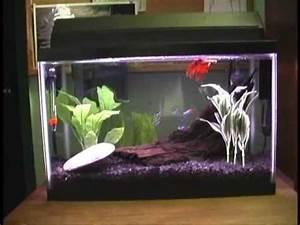 5 gallon fish tank neon tetra Neon Tetra tank 1 5 gallon
