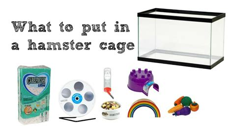 What To Put In Your Hamster Cage Youtube