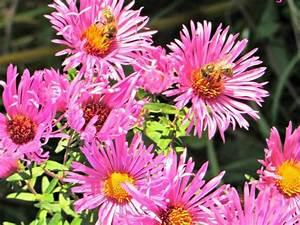 Blumen Für Fensterbank : deine balkonblumen retter f r bienen und hummeln gaias kinder ~ Markanthonyermac.com Haus und Dekorationen