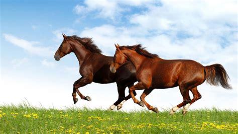 Animated Running Wallpaper - wallpapers of horses running modafinilsale