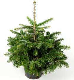 Tannenbaum Im Topf : weihnachtsbaum im topf das sagt der spezialist gartenblog wyss ~ Frokenaadalensverden.com Haus und Dekorationen