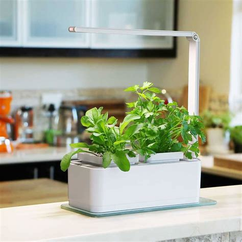 hydroponic indoor herb garden  grow light  timer