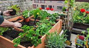 Quand Planter Lavande Dans Jardin : 6 conseils pour faire son potager sur son balcon ~ Dode.kayakingforconservation.com Idées de Décoration