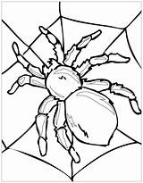 Coloring Insects Pages Spider Insect Print Justcolor sketch template