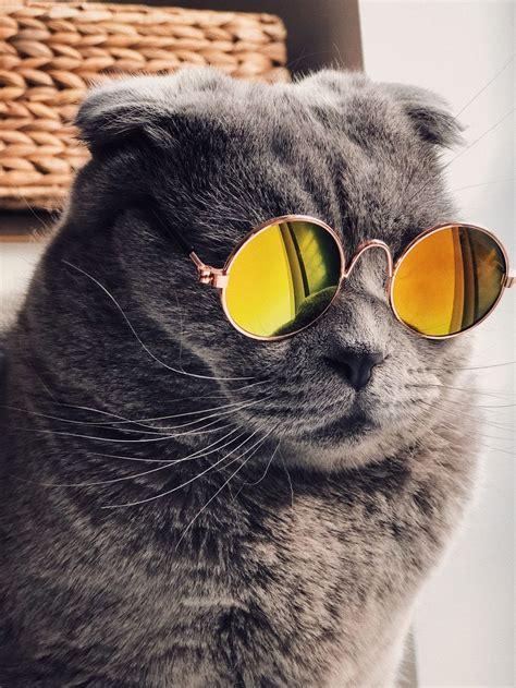 glasses cat galaxy wallpapers top  glasses cat