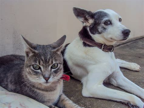 cats dogs better than reasons cat dog thesprucepets why captions animal puppies point person