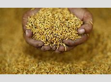 The plague and promise of Thai rice Asia Times
