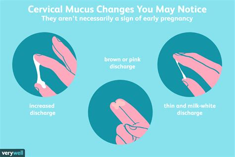 Can Cervical Mucus Help You Detect Early Pregnancy?