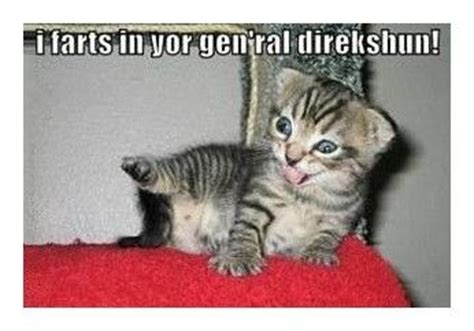 Cat Fart Meme - i fart in your general direction meme pinterest