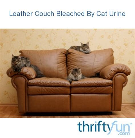 leather couch bleached  cat urine thriftyfun