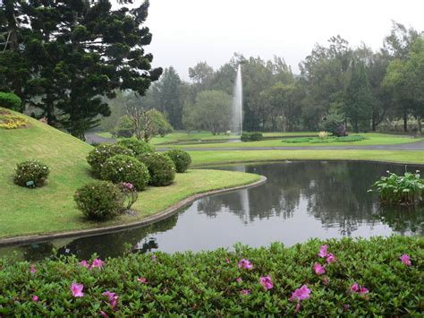 pemandangan hijau  kebun raya cibodas batikbesurekcom