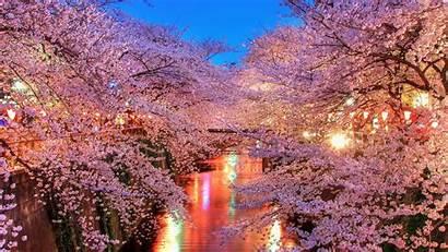 Japan Wallpapers Japanese Desktop Pretty Cherry Beauty