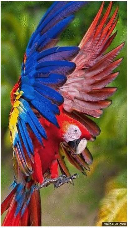 Birds Tropical Bird Macaw Scarlet Animals Exotic