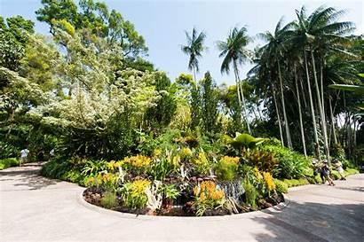 Garden Orchid National Crane Fountain Gardens Singapore