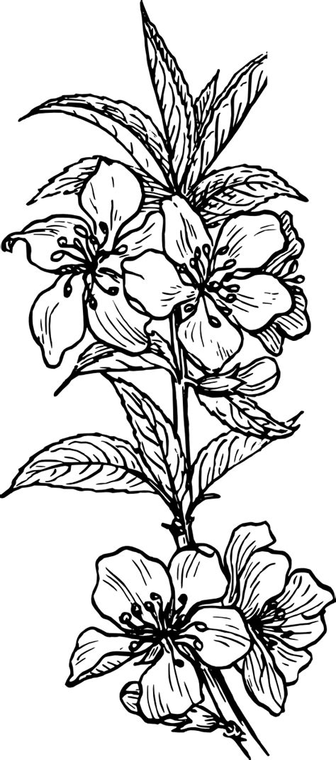 Free Black And White Flower Tattoo, Download Free Clip Art, Free Clip Art on Clipart Library