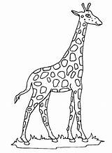 Giraffe Coloring Pages Fun sketch template
