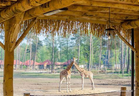 safari resort beekse bergen hilvarenbeek topper