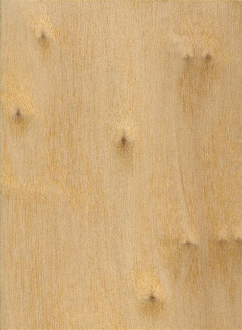 poplar wood black poplar the wood database lumber identification hardwood