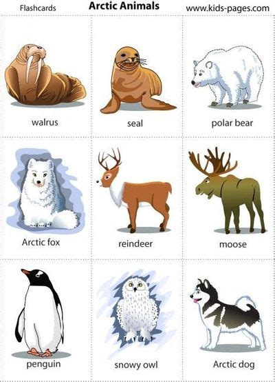 arctic animals printable poster and or cards 577 | l bce72200 84ce 11e1 801c bfd0cee00004