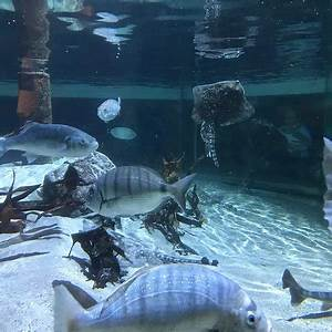 Sea Life Speyer Gutschein : sea life speyer 2019 all you need to know before you go with photos tripadvisor ~ Watch28wear.com Haus und Dekorationen
