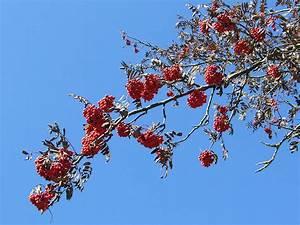 Kostenlose Bilder Herbst : herbst in den alpen hintergrundbilder kostenlos ~ Yasmunasinghe.com Haus und Dekorationen