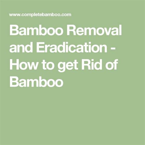 how do you get rid of bamboo 379 best images about bamboo on pinterest bamboo furniture growing bamboo and how to plant bamboo
