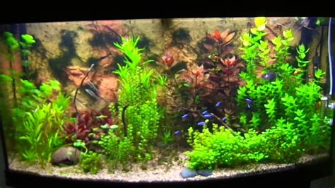 aquarium juwel vision 260 juwel vision 260 plantenbak