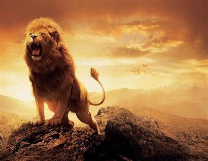 Lion Wallpapers Roaring Angry