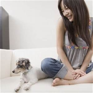 dog sitting dog boarding with trusted sitters pawshake With dog day sitting