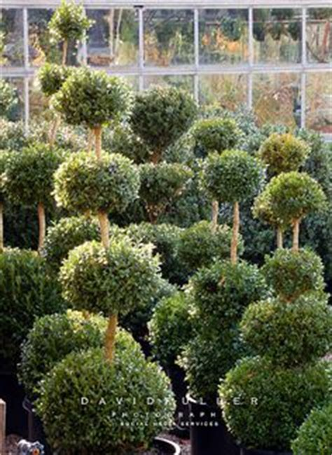 1000 images about garden topiary nursery on