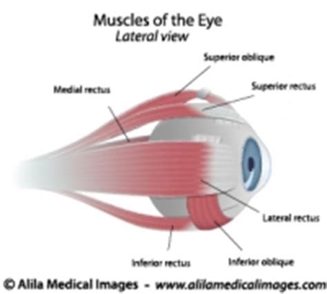 eyes vision gallery  medical images  education